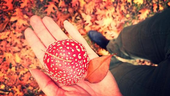 herfst | Wendyext